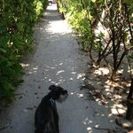 Private walkway to beach from Island Hideaway