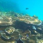 resort reefs