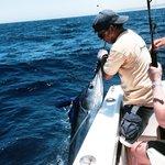 Pulling in a striped marlin