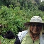 being close to gorillas is wonderful