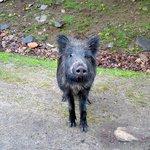 Cutest boar