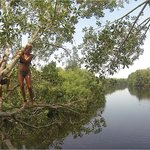 mangrove jump to the river