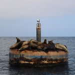 Many sea lions complained when one shifted sides.