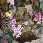 orchid water garden