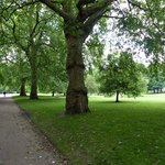 Large and lovely trees in Green Park