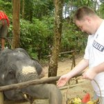 Hand feeding the elephant you get to ride on