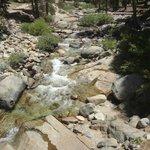 River running through Lodgepole