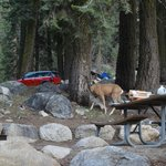 Wildlife in campground