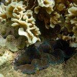 ภาพถ่ายใต้น้ำของอ่าวจันทร์สม หาดส่วนตัวของจามจุรี วิลล่า