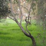 Kangaroos in back paddock
