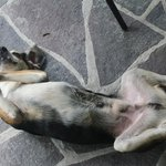 """""""Fred"""" rolling around inside the open air cafe - so cute"""