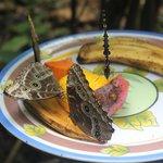 butterflies instead garden next door
