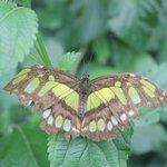 butterfly next door