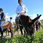 Argonaftis Tours - Kelokedara Donkey Farm