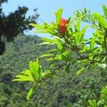 Skiathos - grünes Paradies!