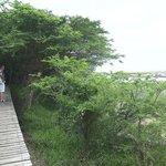 Saint Lucia Estuary (07)