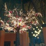 Giant Manzanita Tree at the Mexican