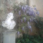 Diana in the garden and wisteria