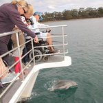 Dolphin watching made easy