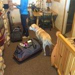 Kona helping us get settled