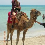 Palito anime  la journée Tunisienne !