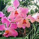 Flourishing flora at every corner