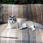 オーナーの愛猫のTara