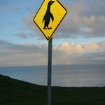 watch out for the penguins