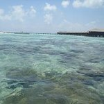 shallow part of reef