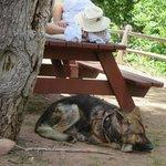 pet friendly/ kennel