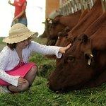 Mädchen beim Kühe füttern
