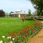Tulips in bloom at Monticello April 2013