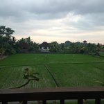 View of rice field from room