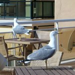 Seagulls visiting the pool area