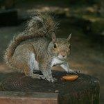 Hand feeding a squirrel