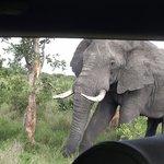 Kruger - Satara Camp => Kruger Gate