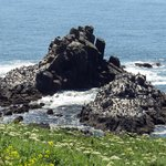 Nesting rocks below Yaquina Head Lighthouse