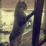 Кошка умоляла открыть окно и пустить ее