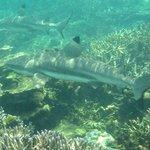 Sharks at Dolphin Island