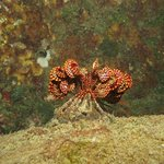 Coral bed of Trincomalee