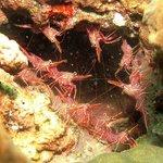 Sea treasure of trincomalee