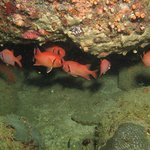 Sea life of Tricomalee