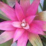 Pretty flower :)