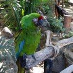 Bird on Island