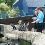 Sea Life Penguin feeding