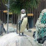 Sea Life Penguins