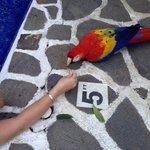 Carlotta the friendly hotel parrot.  Love Fries