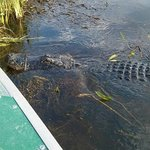 13 foot gator named Popeye 50 to 55 years old