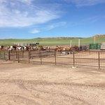 Gathering horses