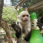 Monkey la la